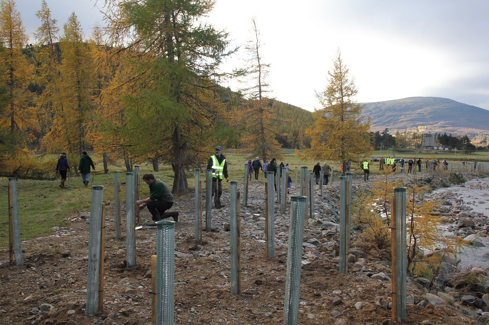 405 Trees planted